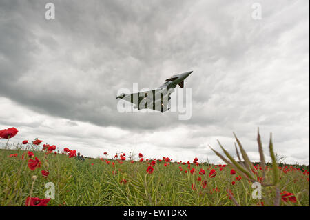 The Royal Air Force Eurofighter Typhoon flying over a poppy field - Stock Photo