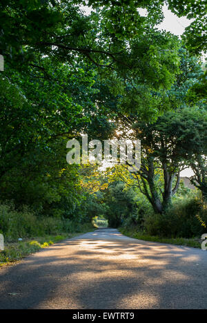 Open road and tree tunnel at sunset in Cornwall. - Stock Photo