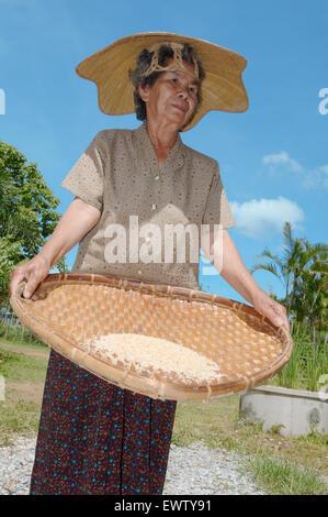 An elderly Thai woman cleans grain rice, Loei province, Thailand - Stock Photo