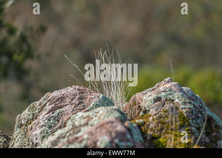 Wild grass growing in granite fissure - Stock Photo