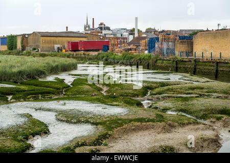 Faversham Creek Silt and Reeds Faversham Kent England - Stock Photo