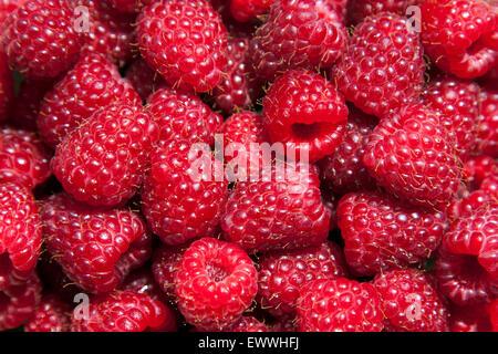 Delicious juicy pink raspberries background - Stock Photo