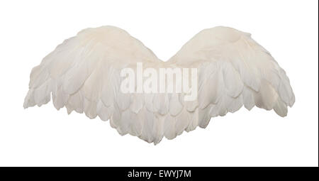 Fanned Out Bird Wings Isolated on White Background. - Stock Photo