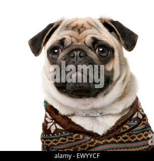 Pug (7 months old) in front of a white background - Stock Photo