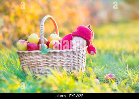 Adorable newborn baby in a big basket with apples in a garden on a sunny autumn day - Stock Photo