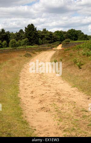 Track on Suffolk Sandlings heathland, Sutton, Suffolk, England, UK - Stock Photo