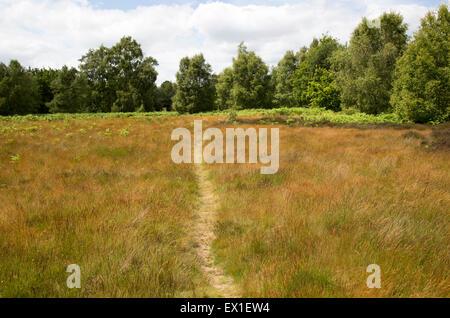 Pathway on Suffolk Sandlings heathland, Sutton, Suffolk, England, UK - Stock Photo