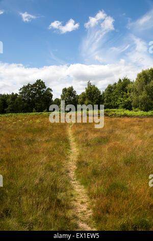 Footpath crossing Suffolk sandlings heathland Sutton, Suffolk, England, UK - Stock Photo