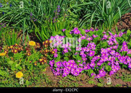 Close image of the lilla flowers in the garden - Stock Photo