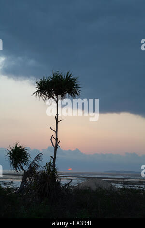 Silhouettes of tropical palm tree at beach during gloomy sunset. - Stock Photo