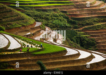 Farmers planting rice in terraces paddies between Sapa and Lao Cai in northern Vietnam during rainy season. - Stock Photo