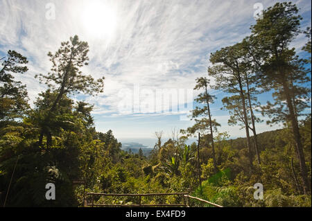 Horizontal panoramic view from a lookout in Topes de Collantes National Park in Cuba. - Stock Photo