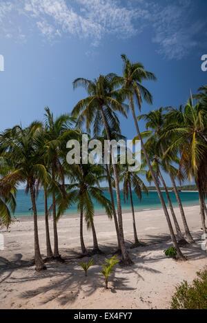 Palm trees on tropical beach under blue sky - Stock Photo