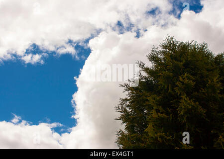 green tree against a cloudy sky on sunny sping day - Stock Photo