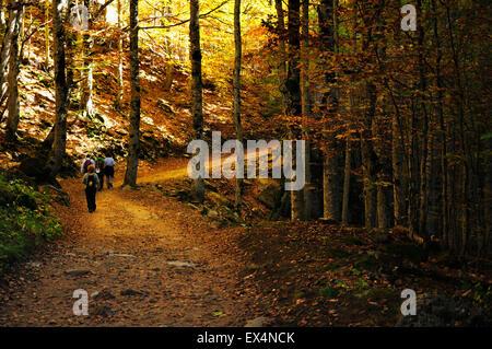 Path in beech forest. Autumn in the Valley Ordesa. Pyrenees, Aragón, Huesca, Spain - Stock Photo