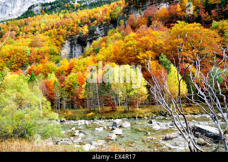 Autumn colors in Ordesa Valley. Pyrenees, Aragón, Huesca, Spain - Stock Photo