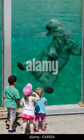 Three children watching a polar bear playing in the water at the Quebec City aquarium - Stock Photo