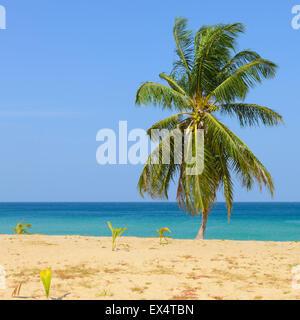 Tropical Beach with Coconut Palm Trees and blue sky in Karon beach Phuket, Thailand - Stock Photo