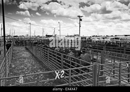 Lexington Livestock Market, Nebraska, USA - Stock Photo