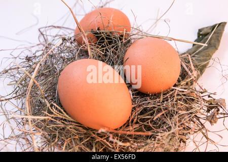 ingredient life hen healthy eggshell food macro organic shell white - Stock Photo