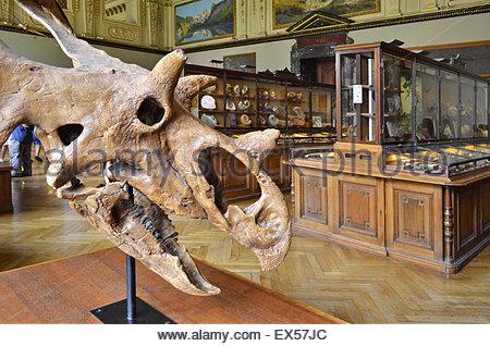 Natural History Museum Of London Dinosaur Animatronics