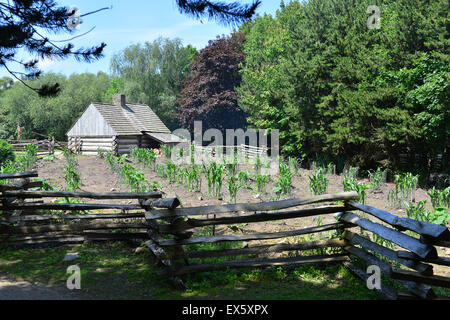 Vegetable crop growing in dry soil, behind a log cabin, at the Ulster American Folk Park. - Stock Photo