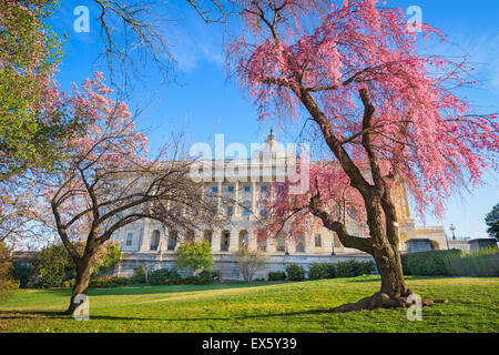 Washington DC at the Capitol Building during spring season. - Stock Photo