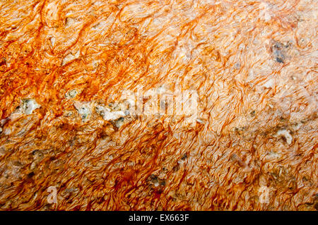 Bacteria mat (thermophilic microorganisms) in hot springs in the Upper Geyser Basin in Yellowstone National Park - Stock Photo