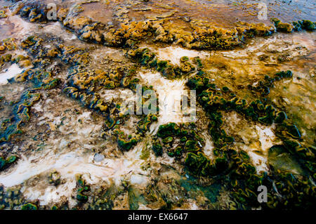Algae and thermophilic microorganisms in hot springs in the Upper Geyser Basin in Yellowstone National Park WY - Stock Photo