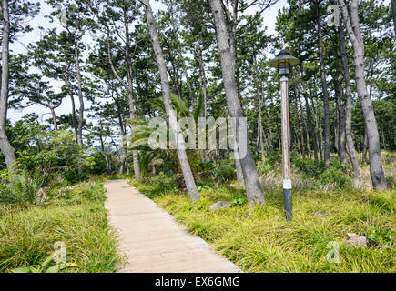VIew of Olle trail course No. 7 in Jeju island, Korea. Olle is famous trekking courses created along coast of Jeju - Stock Photo