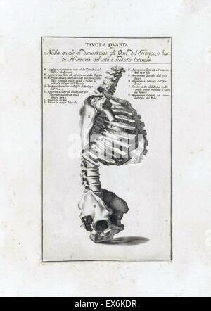 anatomical study by Bernardino Genga 'Anatomia per uso et intelligenza del disegno ricercata non solo su gl'ossi, - Stock Photo