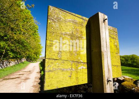 Green algae on a wooden sign near Clapham, Yorkshire Dales, UK. - Stock Photo