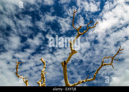 Tree against blue sky in Cyprus with fluffy clouds - Stock Photo