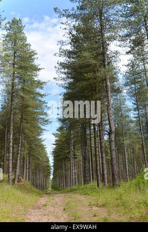 Newborough country park Angelsey, North Wales,UK - Stock Photo
