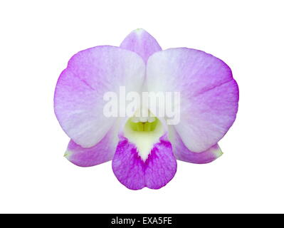 Beautiful purple orchid flower isolated on white background. - Stock Photo