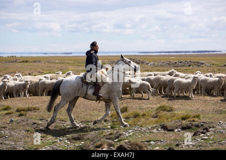 Gaucho on horse with flock of sheep, Tierra del Fuego, Argentina, South America - Stock Photo