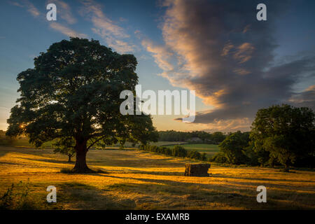 The sun setting behind a beautiful mature tree in rural Yorkshire with a hay bale catching the light - Stock Photo