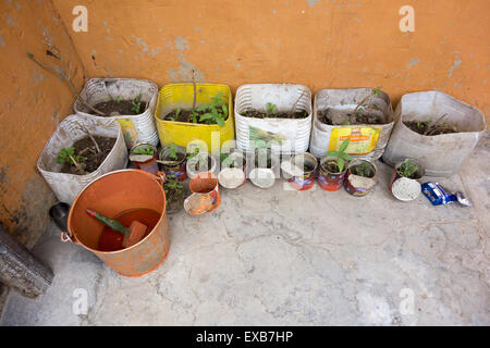 Key Monastery (or Kee, Ki, Kye), Spiti Valley, India - growing plants in containers and orange paint inside the - Stock Photo
