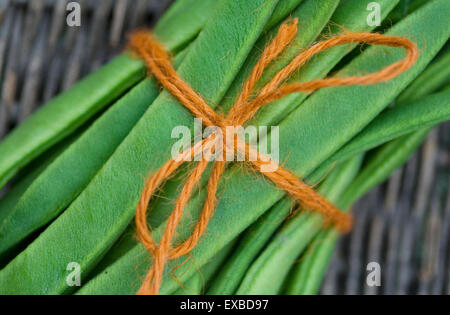 Tied up Runner Beans in a basket. - Stock Photo