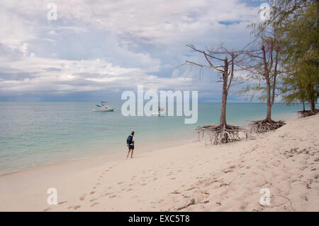 Two trees on the roots are on the sandy shores of the Indian Ocean, Denis island, Indian Ocean, Seychelles - Stock Photo