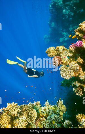 Woman snorkeling underwater, Coral Reef, Blue Hole near Dahab, Red Sea, Egypt - Stock Photo