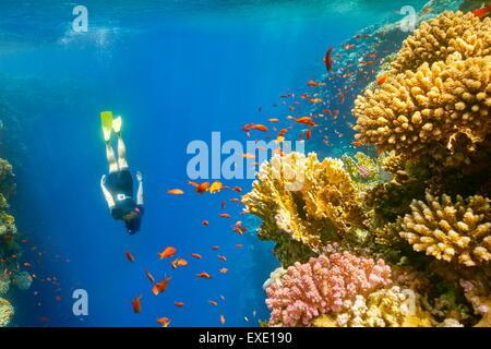Red Sea, Egypt - woman snorkeling underwater, coral reef, Blue Hole near Dahab