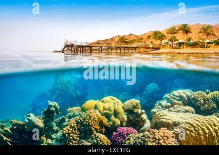 Underwater view, coral reef, Dahab, Red Sea, Egypt - Stock Photo