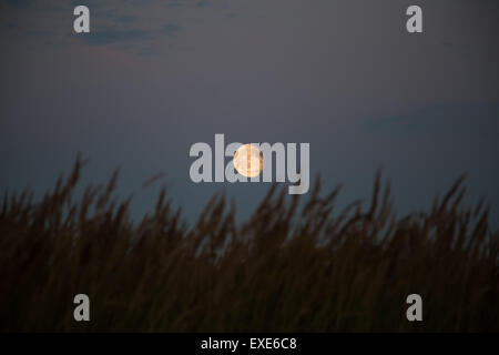 silhouette grass on full moon background - Stock Photo