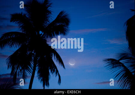 Moon over palm tree in Naples, Florida - Stock Photo