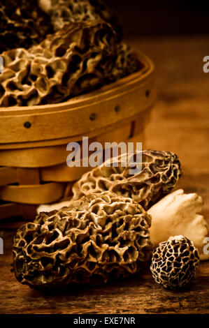 A variety of freshly picked morel mushrooms on wood table. - Stock Photo