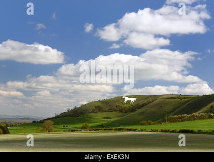 Westbury white horse (Bratton Camp hillfort). - Stock Photo