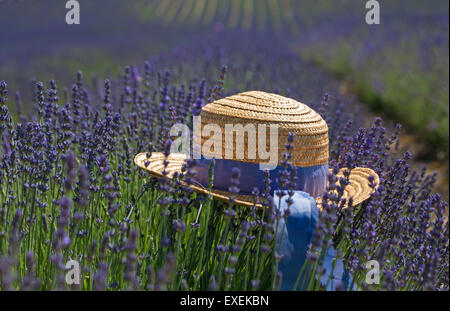 Straw hat on the lavender at Lordington Lavender Farm, Lordington, Chichester, West Sussex UK in July - concept - Stock Photo
