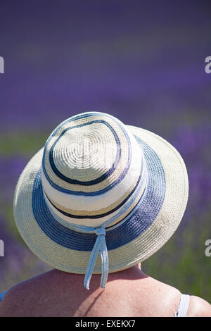 Woman wearing hat enjoying the lavender on an Open Day at Lordington Lavender Farm, Lordington, Chichester, West - Stock Photo