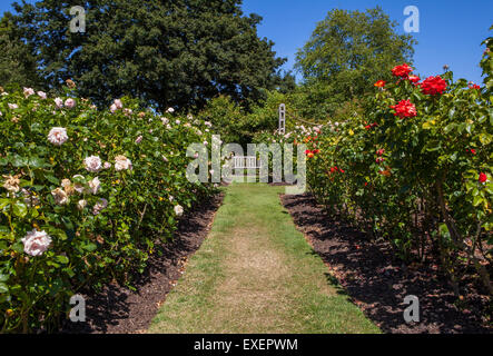 A beautiful view in Queen Marys Gardens in Regents Park, London. - Stock Photo
